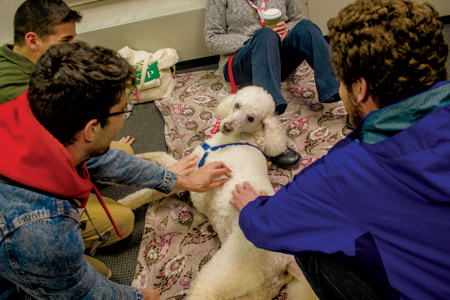 The After Hours organization in cooperation with the Monadnock Humane Society held an event in the Madison Street Lounge during which students pet and played with trained therapy dogs. The event was on Friday, April 6. The dogs that were included ranged from Golden Retrievers, to Poodles and more. The event was put on to allow students to ease their stress in the face of upcoming finals and graduation.